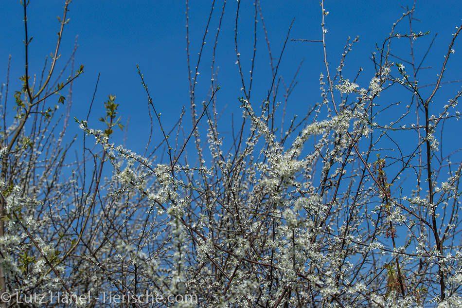 Schönerlinder Teiche Baum Bluetenpracht