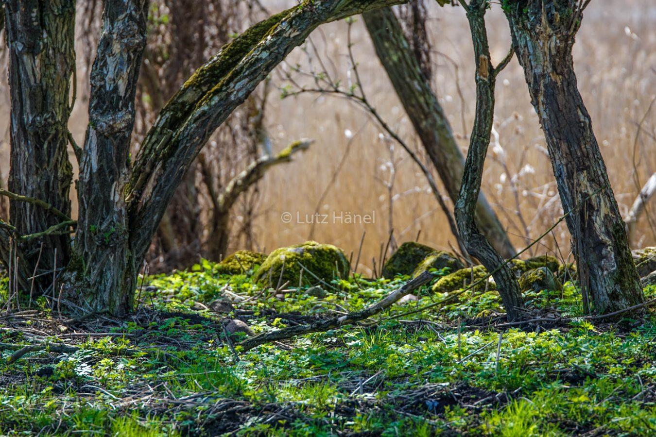 Licht und Schatten Schönerlinder Teiche