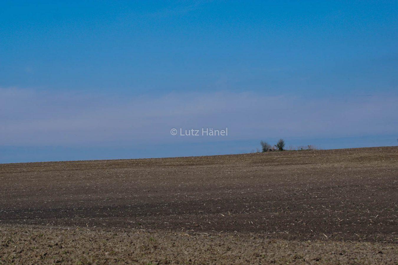 Löwenzahnpfad umgeben von Feldern