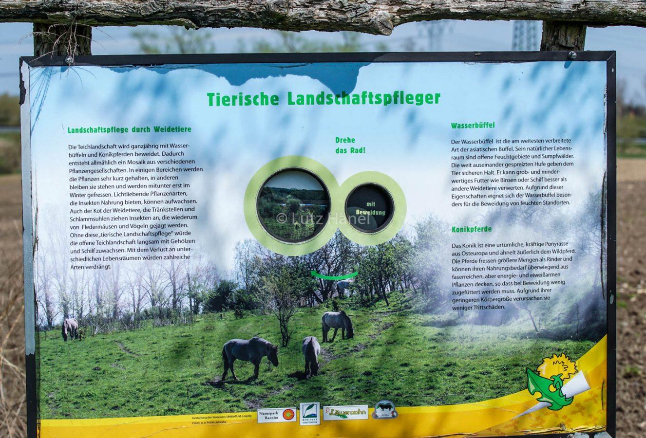 Infotafel Tierische Landschaftspfleger im Mühlenbecker Land