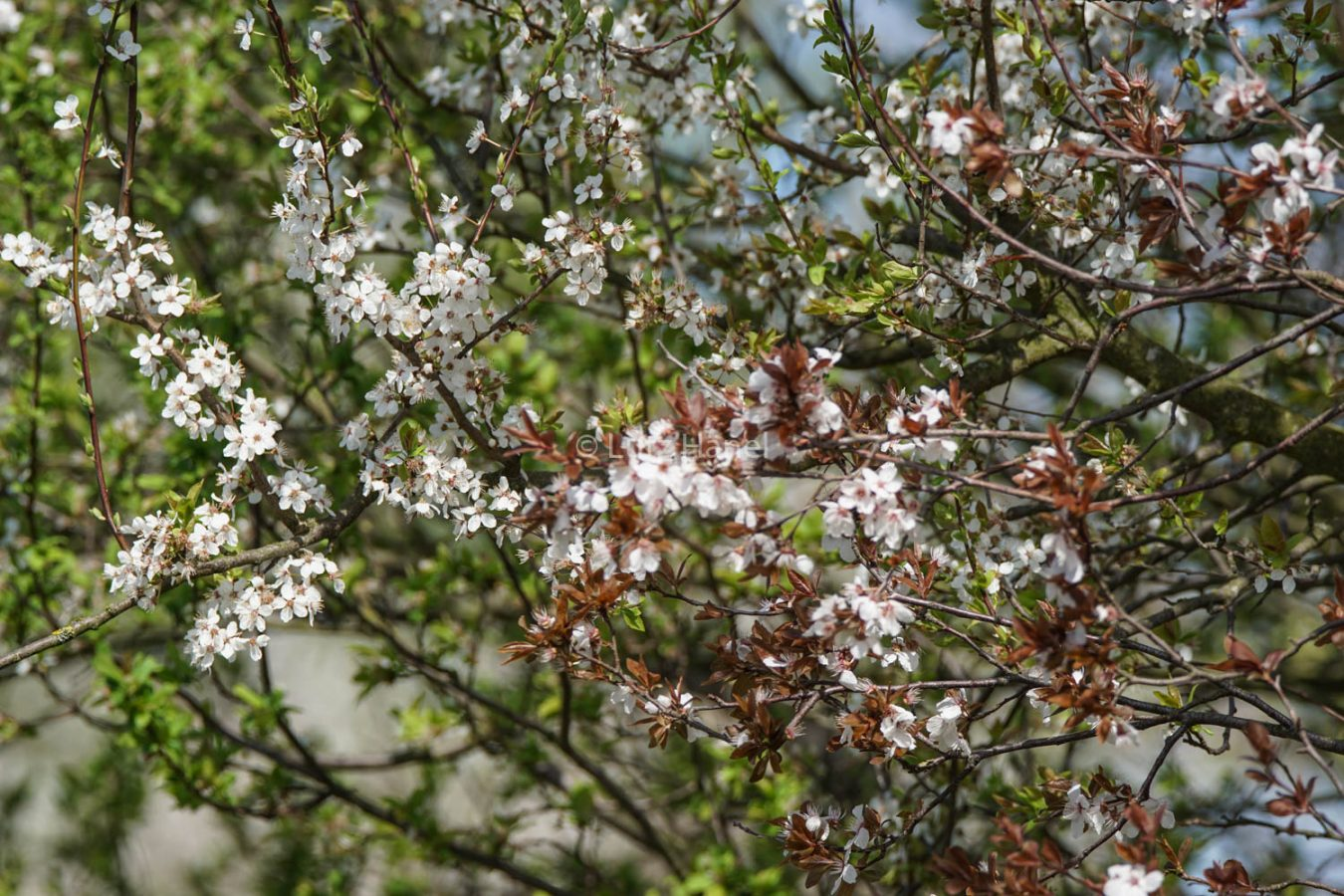 Frühling im Mühlenbecker Land