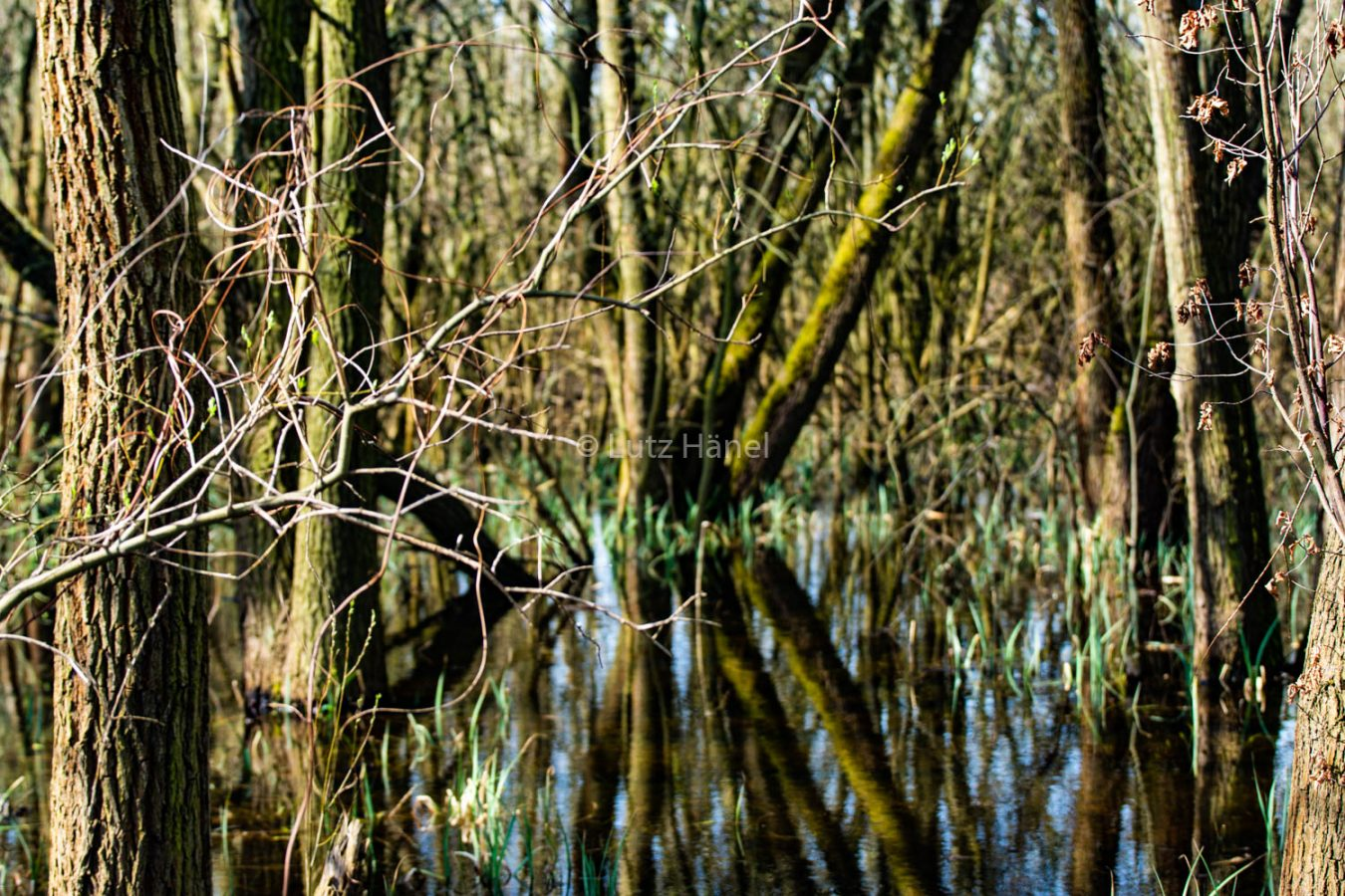 Teich am Löwenzahnpfad