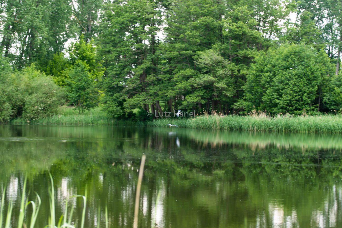 einer der Teiche am Löwenzahnweg